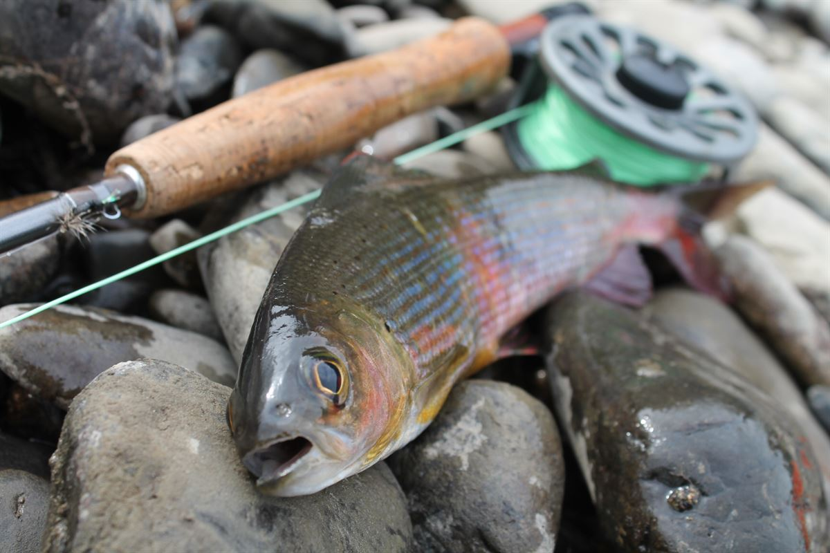 Ваша первая рыбалка на реке Анюй